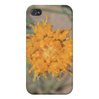 オレンジ野生の花4/4s iPhone 4/4Sケース