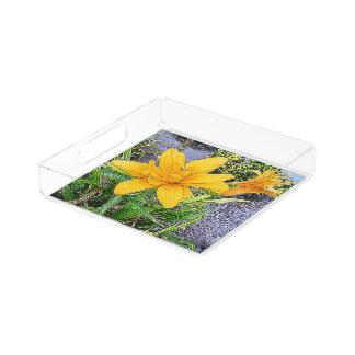 オレンジ開花および芽の写真 アクリルトレー