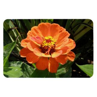 オレンジ《植物》百日草の報酬の磁石 マグネット
