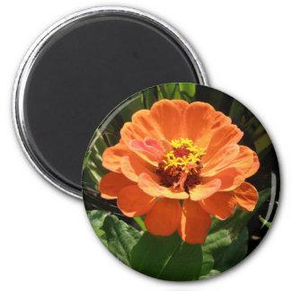 オレンジ《植物》百日草の磁石 マグネット