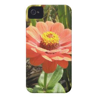 オレンジ《植物》百日草の花のブラックベリーのはっきりしたな箱 Case-Mate iPhone 4 ケース