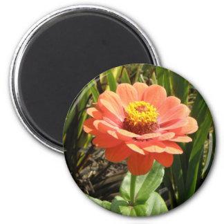 オレンジ《植物》百日草の花の磁石 マグネット