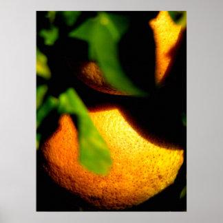オレンジ- Sarasota、フロリダ ポスター