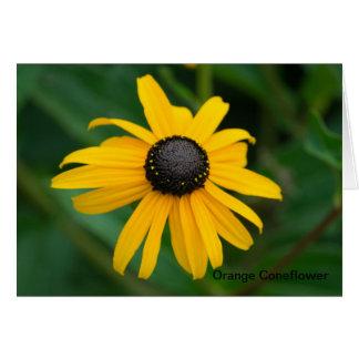 オレンジConeflower Notecards カード