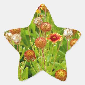 オレンジechinaceaの花園のプリント 星シール