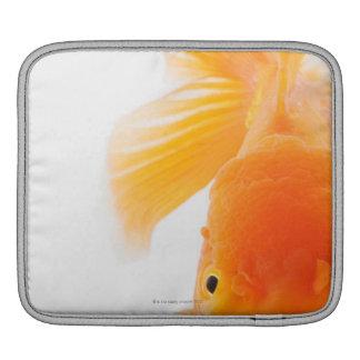 オレンジlionheadの金魚(フナのauratus) iPadスリーブ
