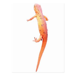 オレンジnewt ポストカード