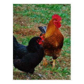 オンドリおよび黒い雌鶏 ポストカード