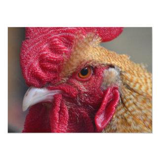 オンドリの鶏 カード