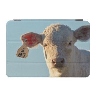 オーガスタ、モンタナ、米国の近くのCharolaiseのビーフの子牛 iPad Miniカバー
