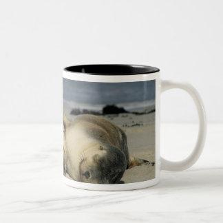 オーストラリアのアシカ、cinerea Neophoca)、 ツートーンマグカップ
