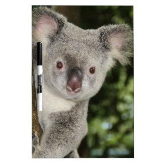 オーストラリアのコアラのかわいい動物 ホワイトボード