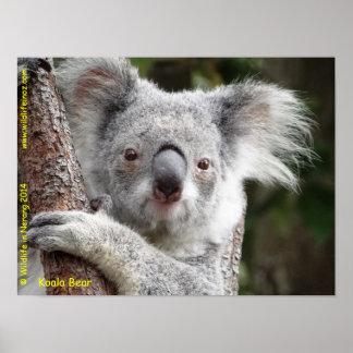 オーストラリアのコアラ ポスター