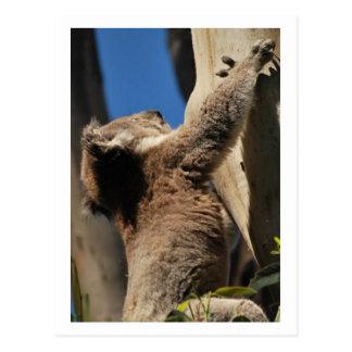 オーストラリアのコアラ ポストカード