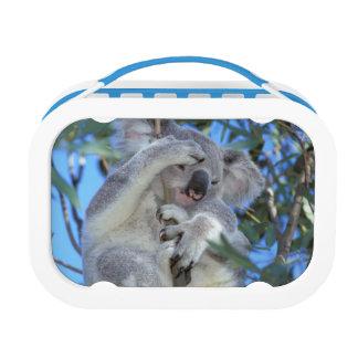 オーストラリアのコアラPhasclarctos Cinereus) ランチボックス