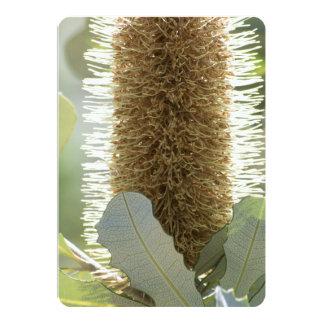 オーストラリアのバンクシアの花 カード