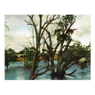 オーストラリアの洪水のヴィンテージマレー川 ポストカード