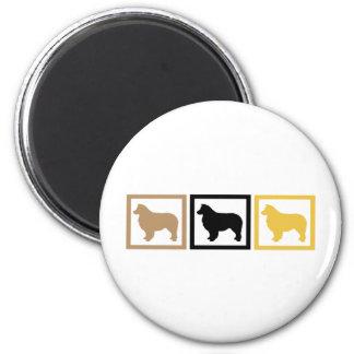オーストラリアの羊飼い犬の正方形 マグネット