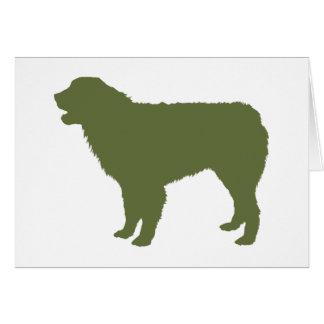 オーストラリアの羊飼い犬 カード