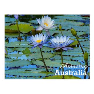 オーストラリアの驚かせる郵便はがき ポストカード