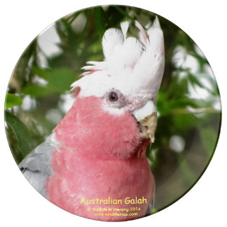 オーストラリア人Galah (Breastedのばら色のオウム) 磁器プレート