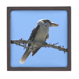 オーストラリア人Kookaburra ギフトボックス