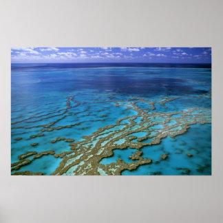 オーストラリア-クイーンズランド-グレート・バリア・リーフ。 6 ポスター