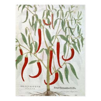 カイエンヌペパーの植物のポートレート ポストカード