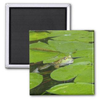 カエルおよびスイレンの浮いている葉の磁石 マグネット