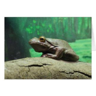カエルの挨拶状 カード