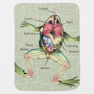 カエルの解剖学のイラストレーション ベビー ブランケット