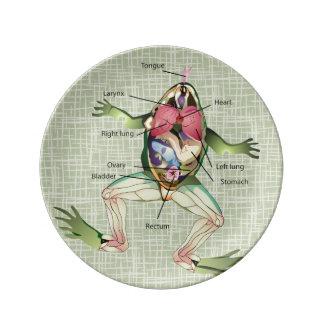 カエルの解剖学のイラストレーション 磁器プレート