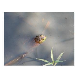 カエル、聖域の沼地 ポストカード
