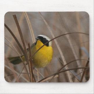 カオグロアメリカムシクイの鳥の野性生物動物の沼地 マウスパッド