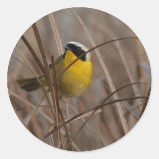 カオグロアメリカムシクイの鳥の野性生物動物の沼地 ラウンドシール