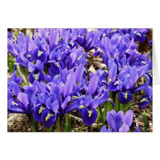 カサリンHodgkinは青い紫色の春の花柄を絞ります カード