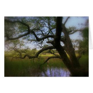 カシおよび沿岸湿地帯 カード