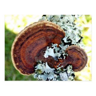カシのMazegillの菌類の郵便はがき ポストカード