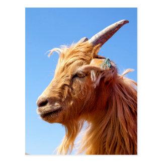 カシミヤ織ヤギの頭部の詳細 ポストカード