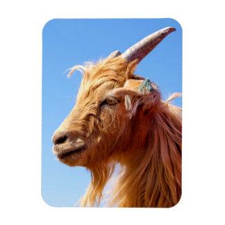 カシミヤ織ヤギの頭部の詳細 マグネット