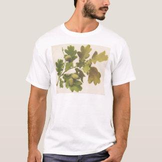 カシ1907年 Tシャツ