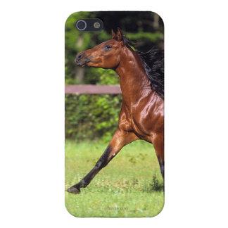 カスタマイズされるゴールデン・リトリーバーのHeadshot 3のiPhone 5 - iPhone SE/5/5sケース