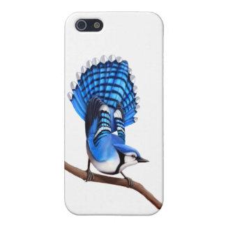 カスタマイズ可能なアオカケスの鳥のiPhoneの箱 iPhone 5 ケース