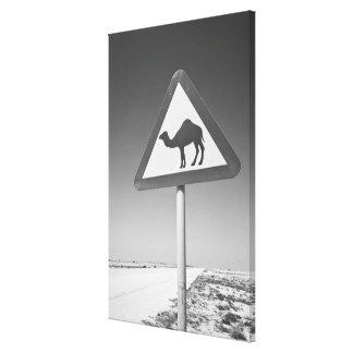 カタールのAl Zubarah。 ラクダの交差の印道への キャンバスプリント