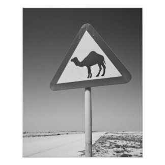 カタールのAl Zubarah。 ラクダの交差の印道への ポスター