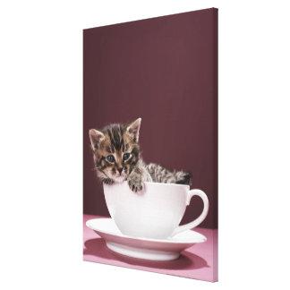 カップ・アンド・ソーサーの子ネコ キャンバスプリント