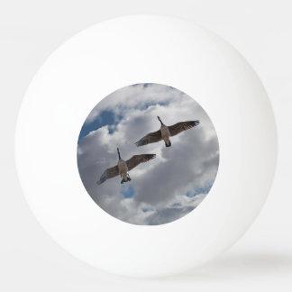 カナダのガチョウ 卓球ボール