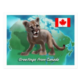 カナダのクーガー ポストカード