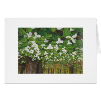 カナダの野生の白い花-低価格のギフト カード