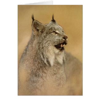 カナダオオヤマネコ(オオヤマネコのcanadensis) -野生猫 カード